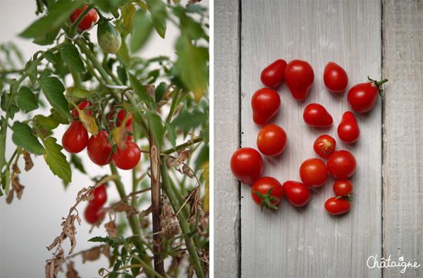 tartines aux tomates cerises et jambon cru