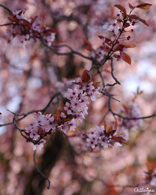 Mochis cranberries-framboises