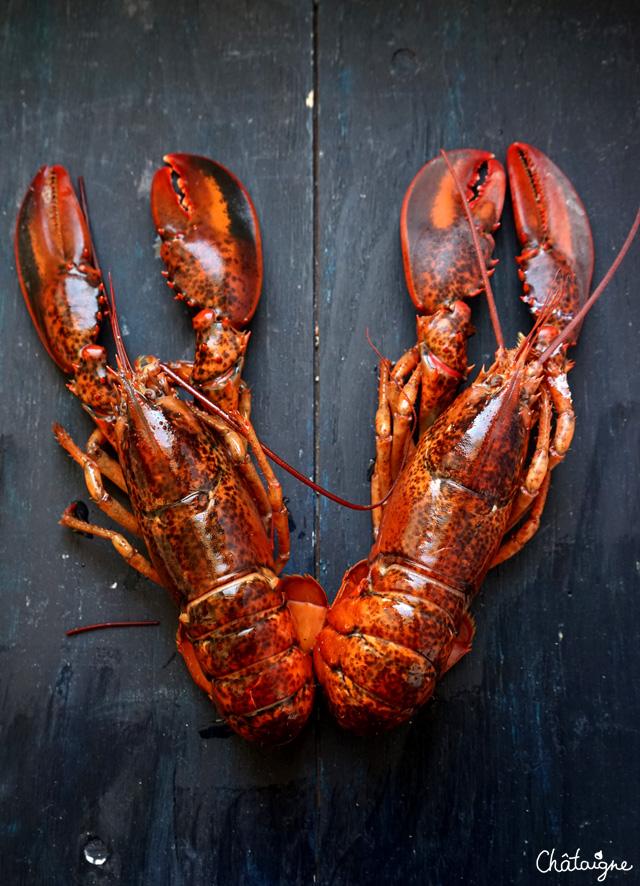 panna cotta de homard