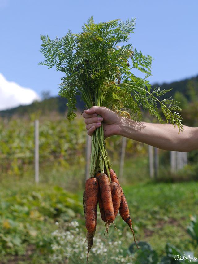 Fritata aux fanes de carottes