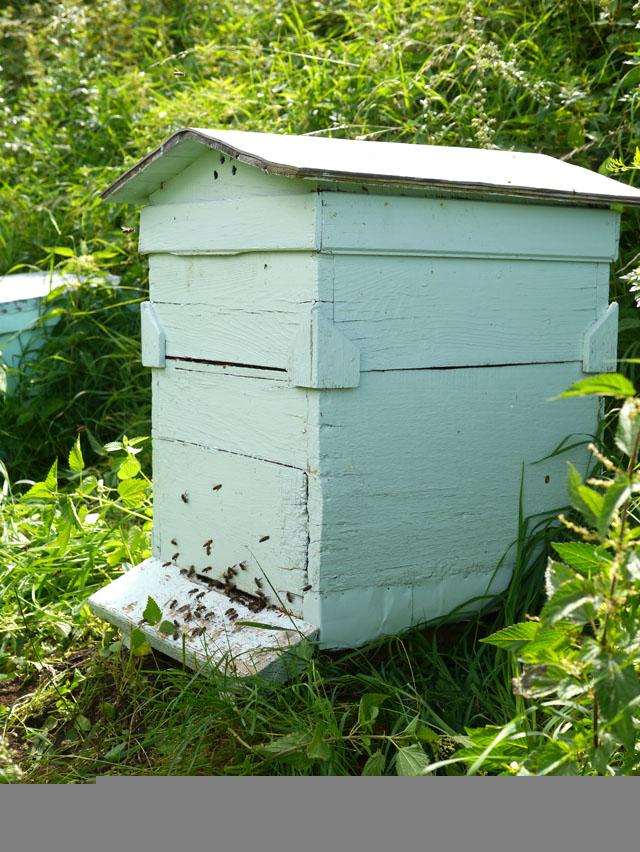 Histoire du miel